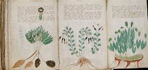 Is The Voynich Manuscript A Health Manual