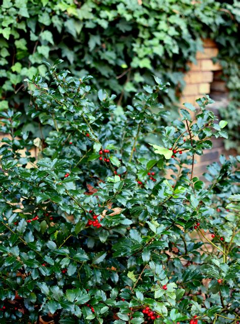 Follow The Yellow Brick Home The Holly And The Ivy
