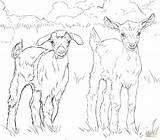 Goat Mountain Coloring Printable Getcolorings Getdrawings sketch template