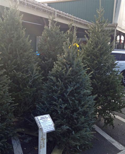 christmas tree sale orchard hardware trees and decorations weaver s ace hardware
