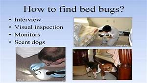 bed bug training for building managers and staff youtube With bed bug training