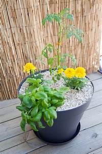Quand Planter Les Tomates Cerises : comment planter tomates cerises en pot ~ Farleysfitness.com Idées de Décoration