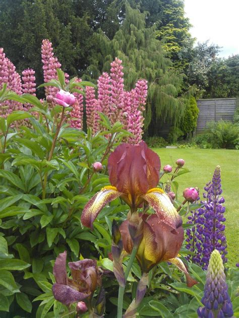 Pinterest Country Gardening Share Garden Project