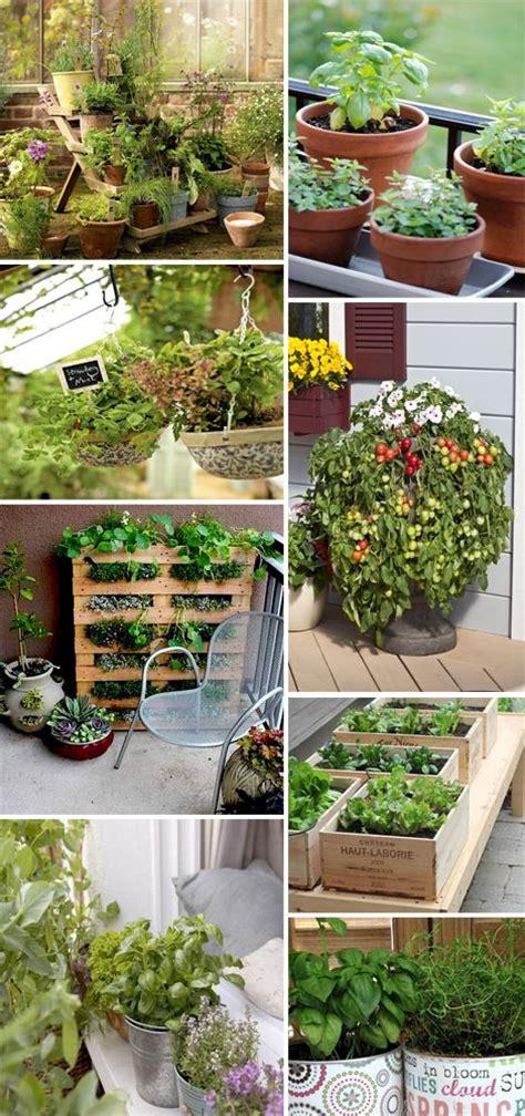 vasi per orto in terrazzo orto terrazzo orto verticale piante aromatiche ortaggi