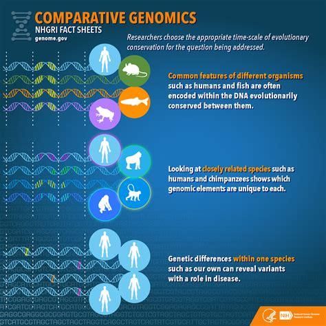 comparative genomics fact sheet nhgri
