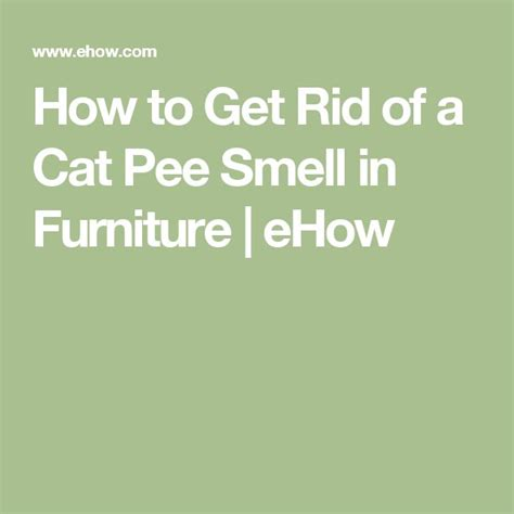 How To Get Rid Of A Cat Pee Smell In Furniture  Pee Smell