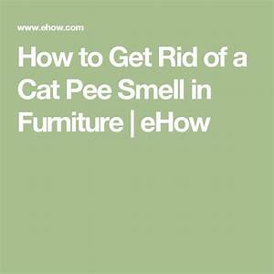 How to get rid of a cat pee smell in furniture pee smell for How to get rid of odors