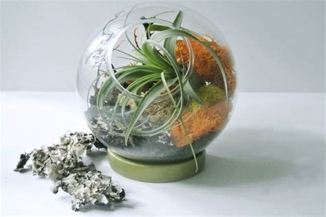enhance your interior with the tillandsia air plant