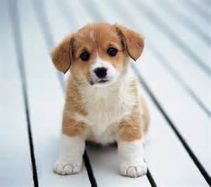 best small non shedding dogs for kids dog breeds picture