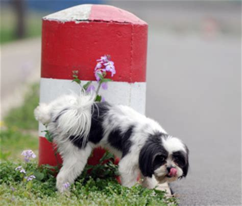 dog   urinary tract infection learn