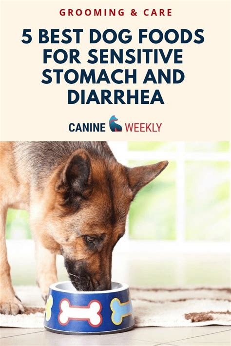 dog foods  sensitive stomach  diarrhea dog