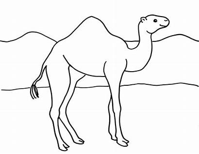 Camel Coloring Camels Pages Printable Template Sketch