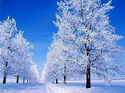 Snowy Scene Winter Scenes Snow Scenery Desktop