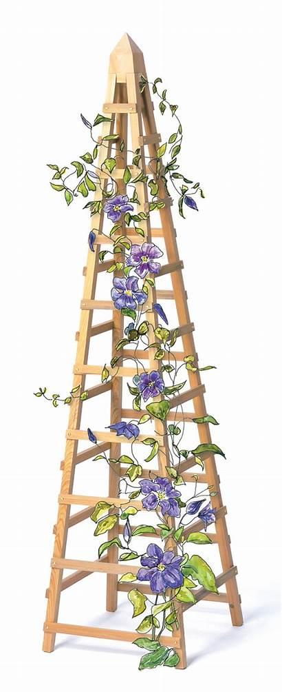 Trellis Vine Diy Vines Climbing Garden Plant