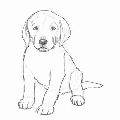 Dog Draw Drawing Guide Step Puppy Leg
