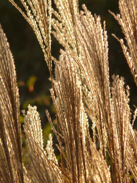 images tree nature branch field barley leaf