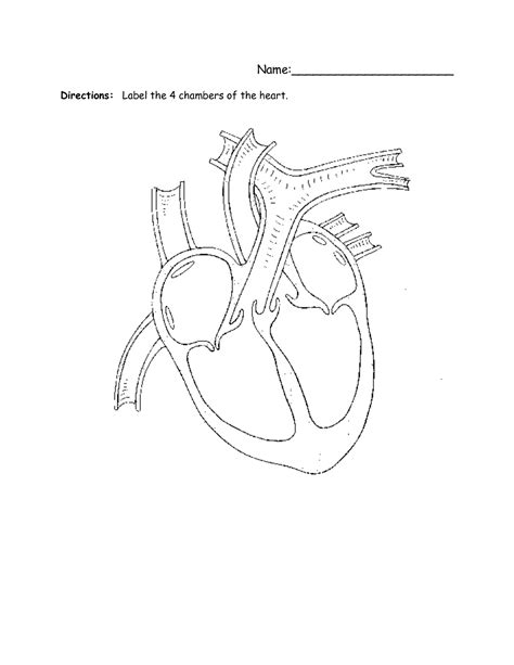 13 Best Images Of Label Circulatory System Diagram Worksheets  Circulatory System Heart Diagram