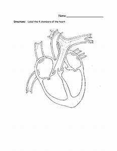 Heart Labeling Worksheet Image Collections