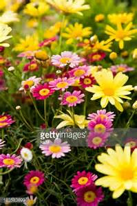 Perennial Plants and Flowers