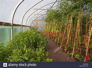 Welche Farbe Passt Zu Kirschbaummöbel : tomaten setzlinge kaufen tomaten pflanzen kaufen tomaten paprika chili pfl nzchen kiepenkerl ~ Watch28wear.com Haus und Dekorationen