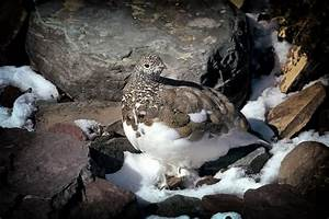 Top 10 Amazing Arctic Birds - The Mysterious World