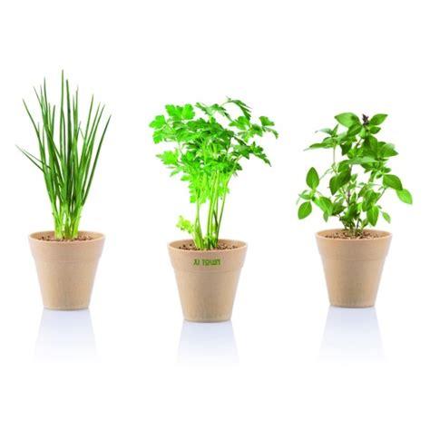 semer persil en pot pot et semence de plantes fleurs et arbres personnalis 233 avec logo v 233 g 233 taux publicitaires