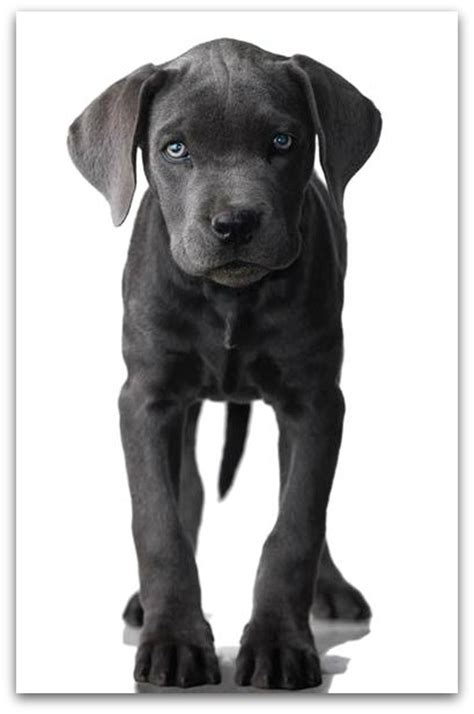 small non shedding dog breeds all breeds of dogs find dog