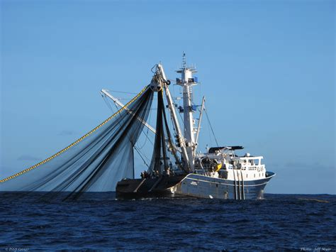 Tuna Boat Cost by T T Facing Possible Sanctions From European Commission