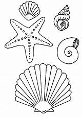 Coloring Pages Seashells Sea Shells Popular sketch template