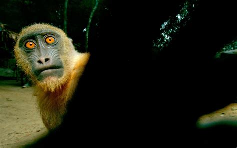 Funny Monkeys Wallpapers  Wallpaper Cave