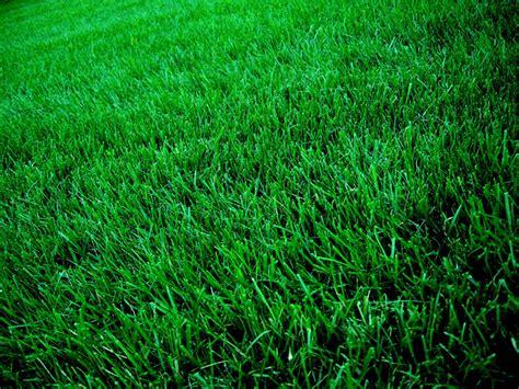seeding a lawn ann arbor lawn service 187 seeding sod