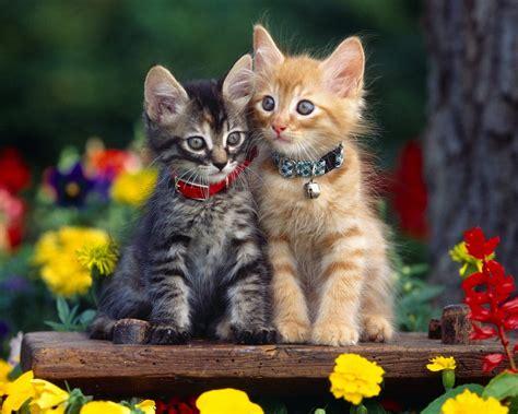 New Cats Wallpaper  Cute  Funny Beautiful