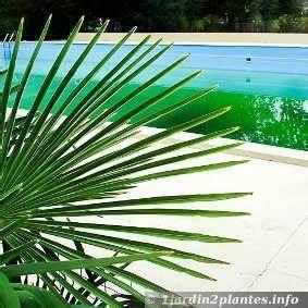 quelles plantes choisir autour d39une piscine With quelle plante autour d une piscine