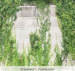 Efeu Als Zimmerpflanze : efeu von der hauswand fassade entfernen wurzeln vernichten ~ Indierocktalk.com Haus und Dekorationen