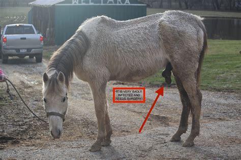 horse penis vulcan bucket february fund receipt update he