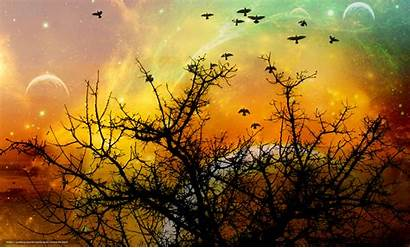 Trees Sunset Birds Wallpapers Manually Rendering Changing