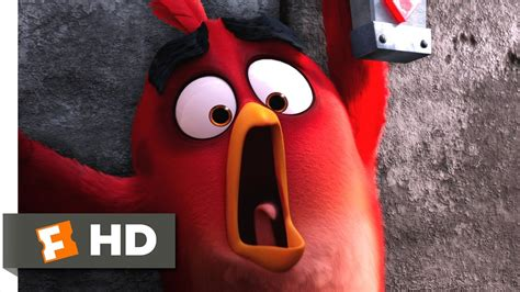 angry birds save  egg scene  movieclips