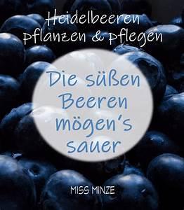 Heidelbeeren Im Kübel Pflanzen : sommer ist heidelbeerzeit kultur heidelbeeren pflanzen ~ Watch28wear.com Haus und Dekorationen