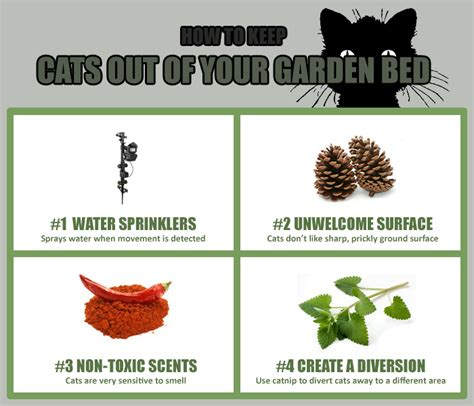 keep cats out of garden 6 ways to keep stray cats away from the garden flower bed