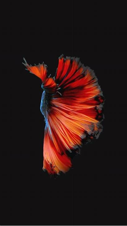 Iphone 6s Wallpapers Fish 4k Apple Ios