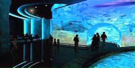 taraporewala aquarium mumbai a whole best moment photoes photoes of taraporewala aquarium mumbai