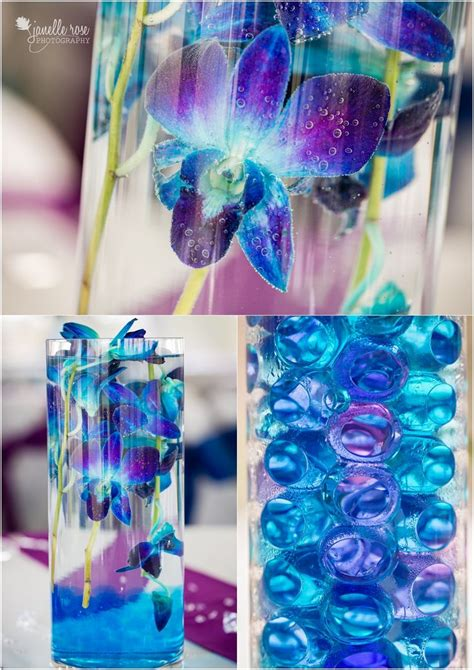 25 Best Ideas About Blue Orchids On Pinterest Blue