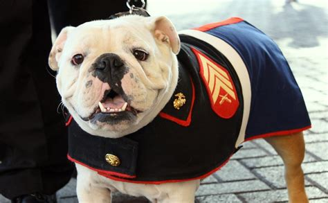 tank  marine dog laurences pictures flickr