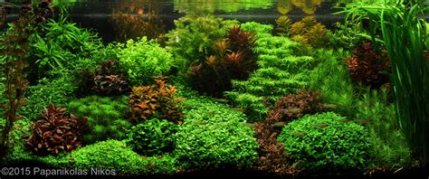 Dutch Aquarium Aquascape A Style From The 1930s