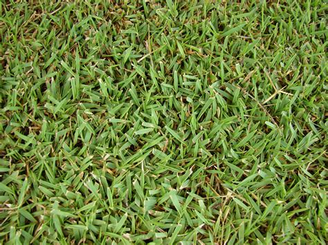 types of grasses types of lawn grasses for warm climates