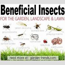 Bennies  Beneficial Insects  Garden Insects, Garden Bugs
