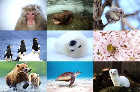 nature  japan encyclopedia  japan