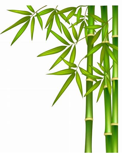 Bamboo Transparent Clip Background Clipart Vector Tree