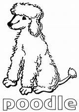 Poodle Coloring Pages Toy Printable Adults Fabulous Cartoon sketch template