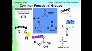 Ap Biology Ch 3 Part 1 Functional Groups And Carbohydrates